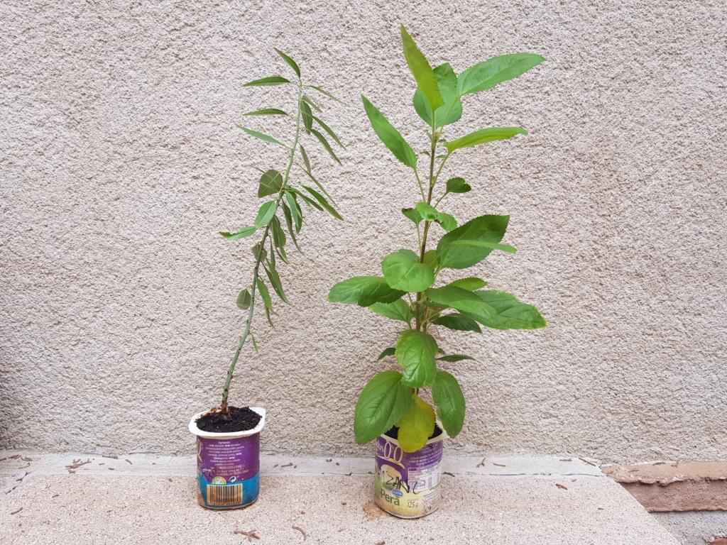 Trasplante manzano y almendro  20190912