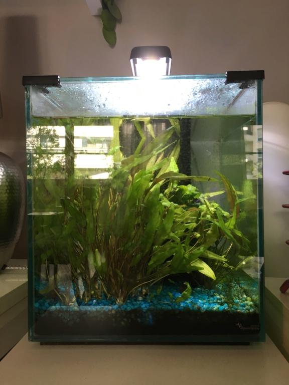 Mon aquarium 40 litres (surpopulation ?) A1c2ab10