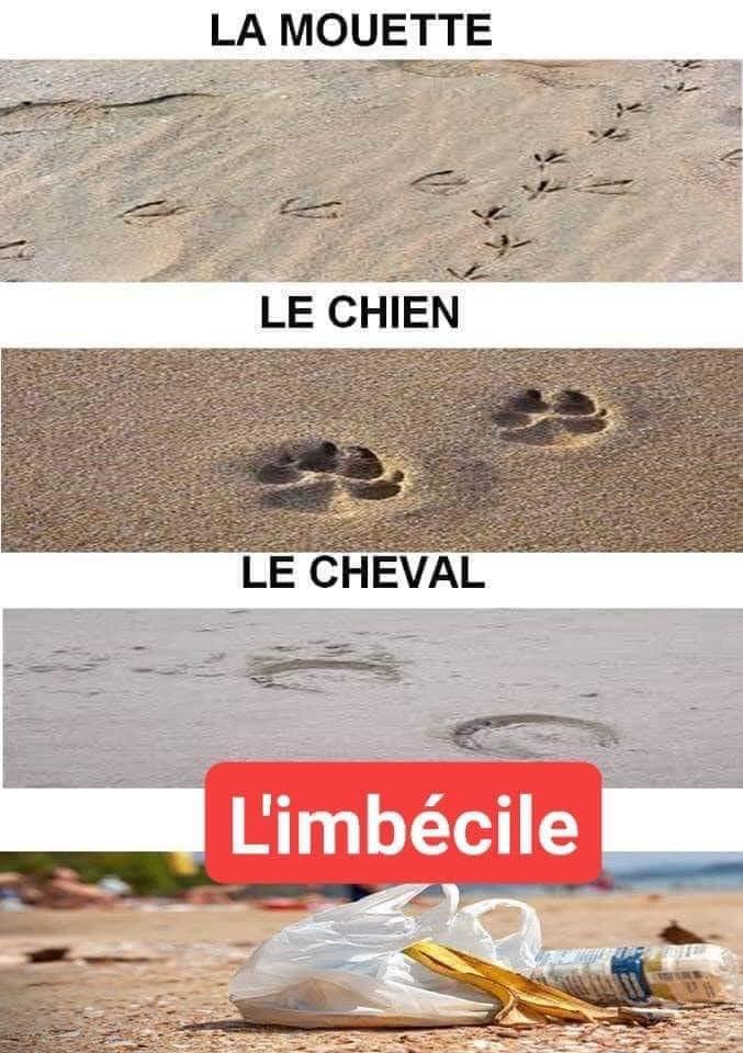 Satirique Écologique Zoco_010