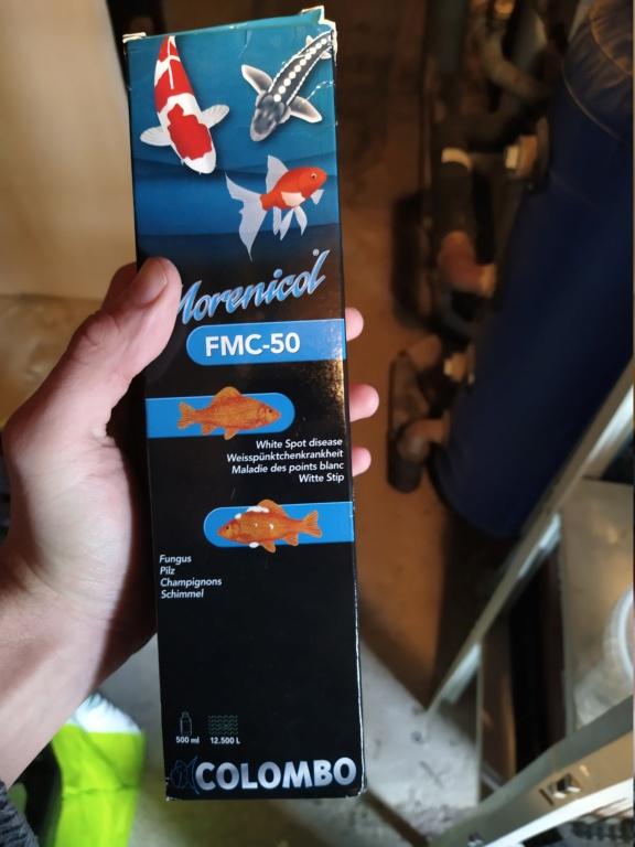 Au secours poissons malades Img_2024