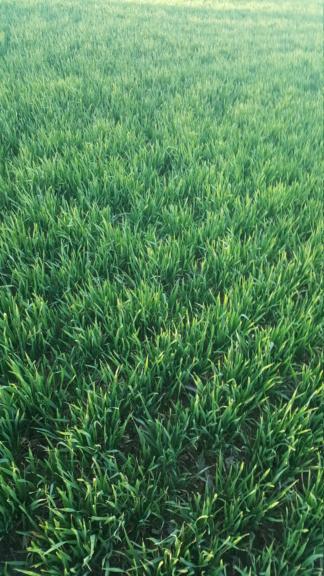 suivi blé 2021 - Page 3 20210310