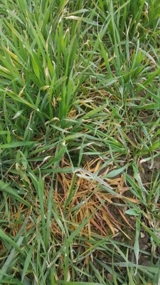 suivi blé 2021 - Page 4 20210318