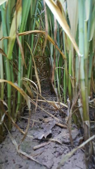 suivi blé 2021 - Page 18 20210515