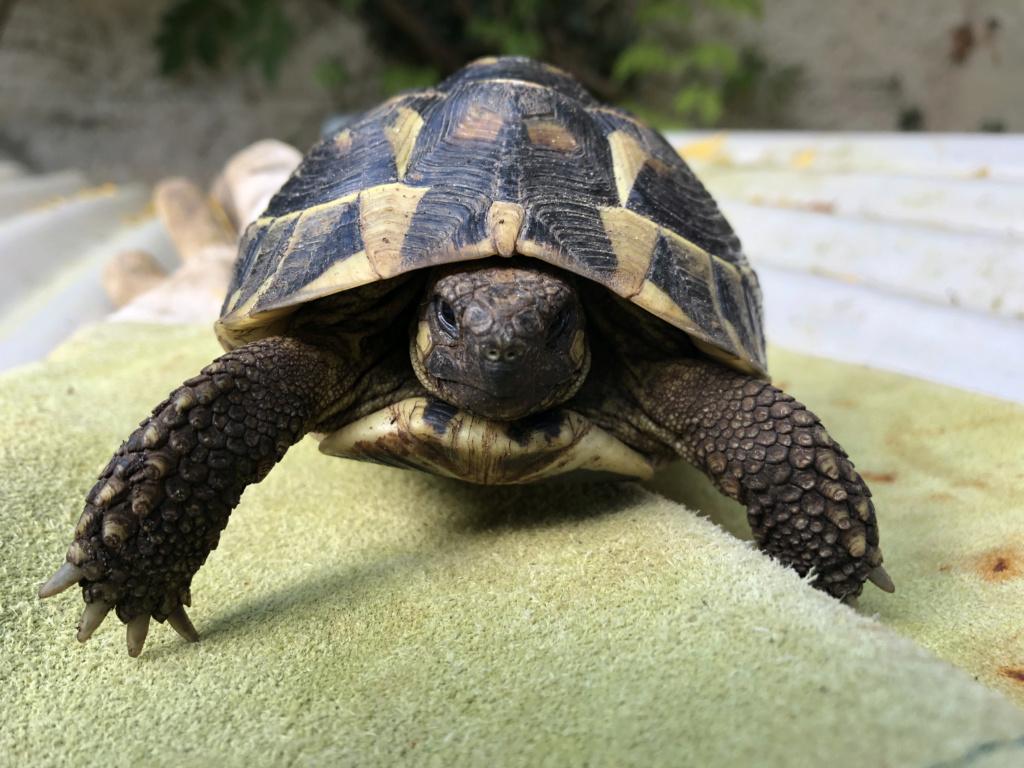 Identification de deux tortues terrestres 03189b10