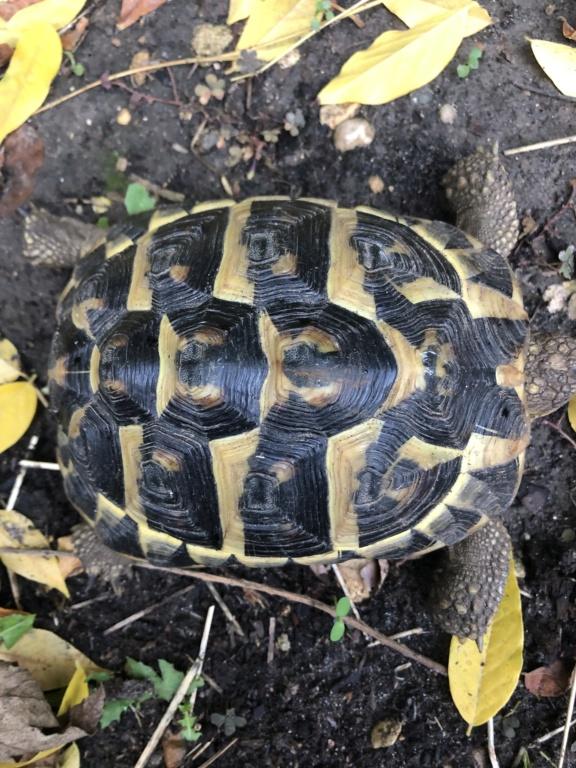 Identification de deux tortues terrestres 58262910