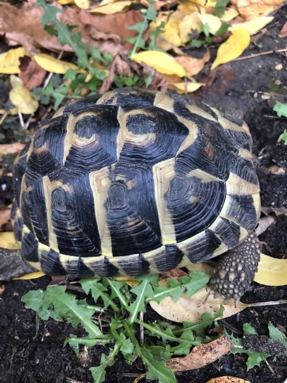 Identification de deux tortues terrestres Dd129210