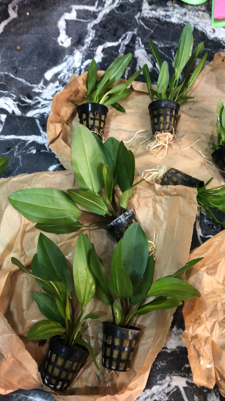 Identification de cette plante Img-2013