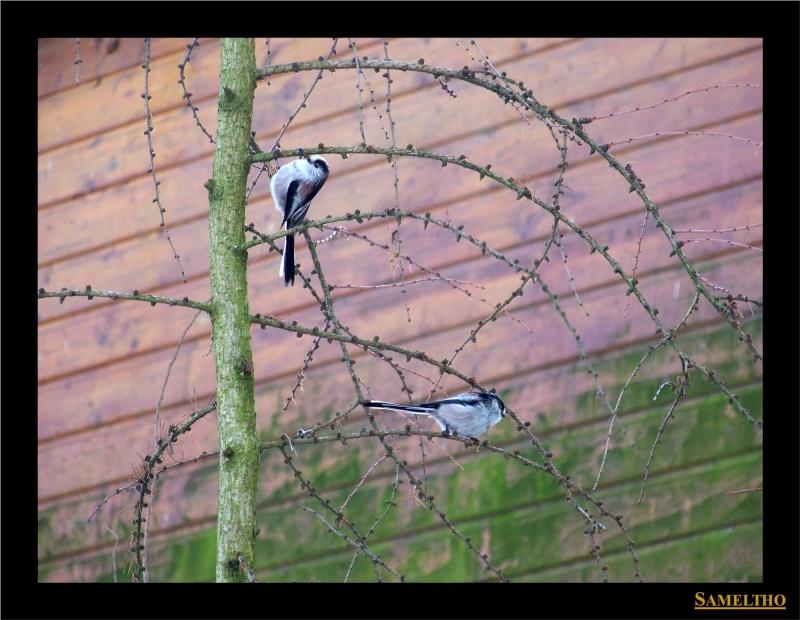 Les oiseaux sauvage que l'on rencontre dans le zoo Dans_l11