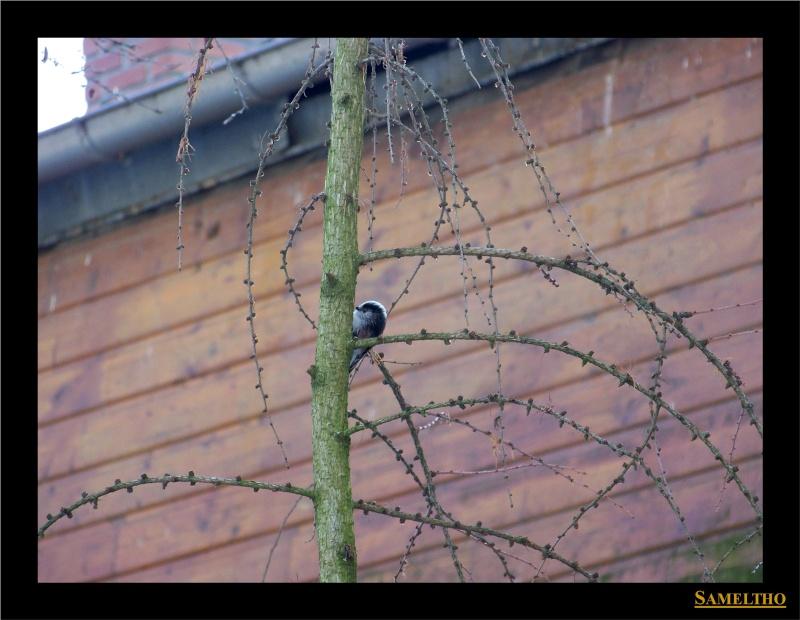 Les oiseaux sauvage que l'on rencontre dans le zoo Dans_l13