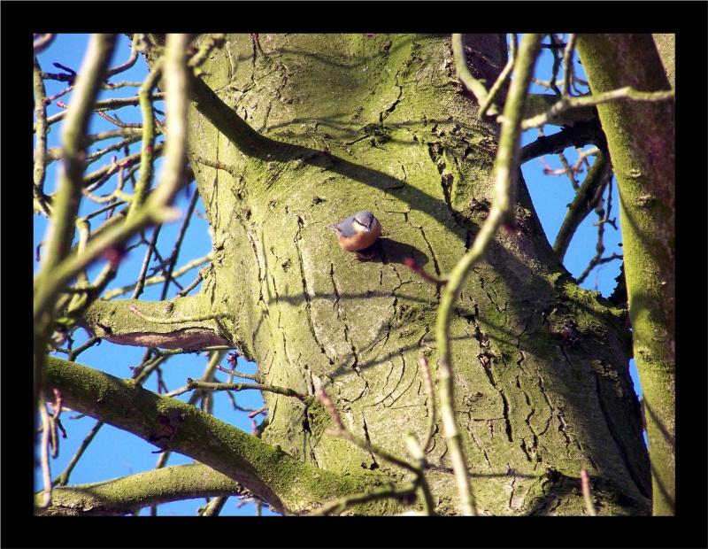 Les oiseaux sauvage que l'on rencontre dans le zoo Dans_l15