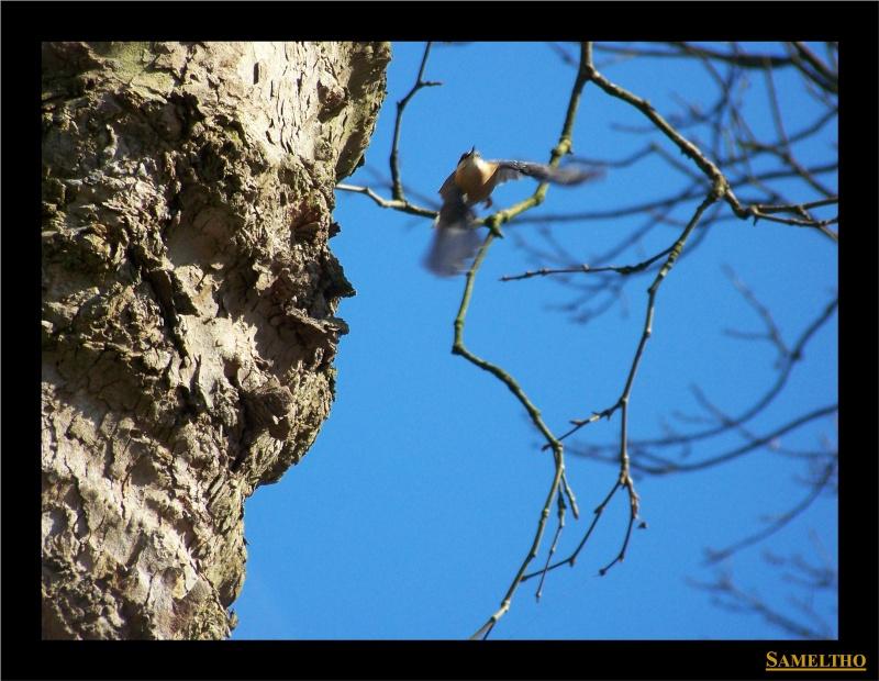 Les oiseaux sauvage que l'on rencontre dans le zoo Dans_l17
