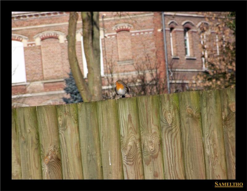 Les oiseaux sauvage que l'on rencontre dans le zoo Dans_l18