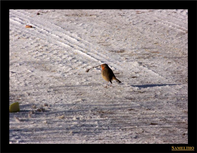 Les oiseaux sauvage que l'on rencontre dans le zoo Dans_l19