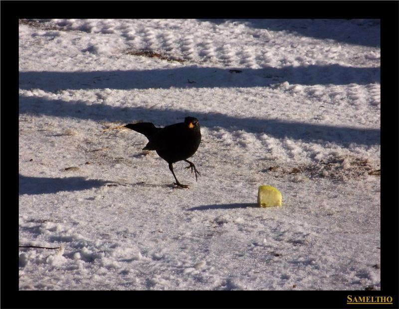 Les oiseaux sauvage que l'on rencontre dans le zoo Dans_l20