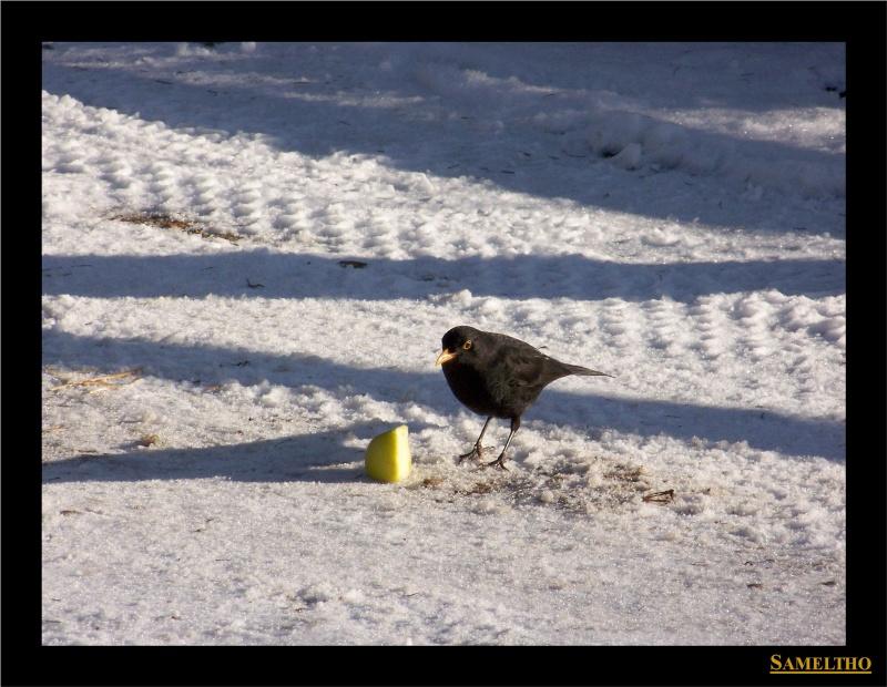 Les oiseaux sauvage que l'on rencontre dans le zoo Dans_l21