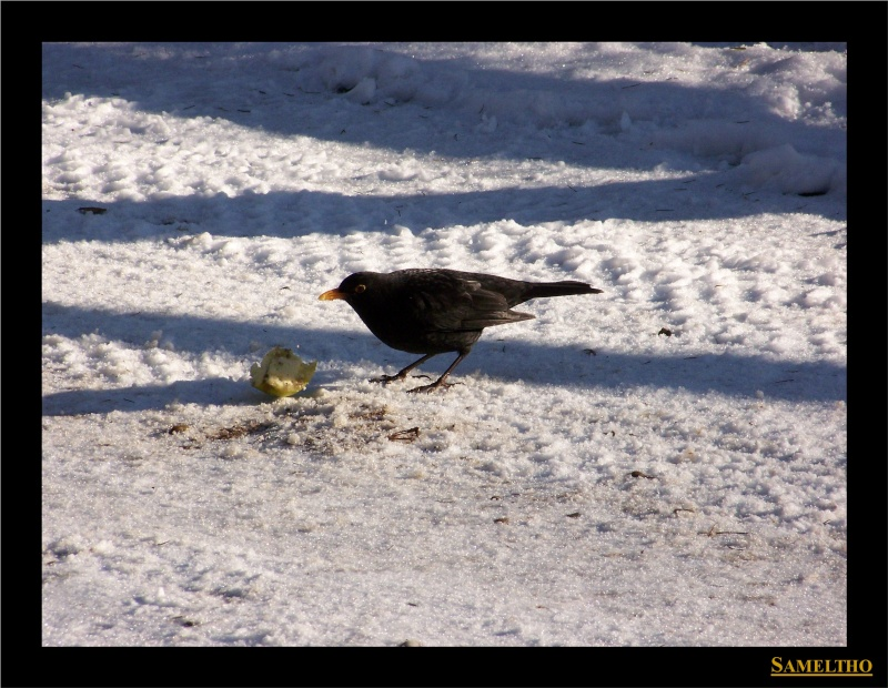 Les oiseaux sauvage que l'on rencontre dans le zoo Dans_l22