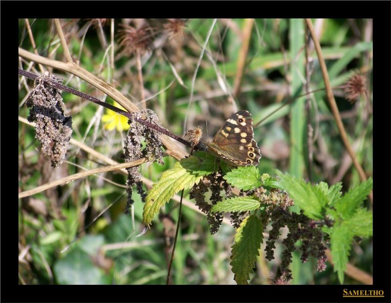Les papillons sauvages du zoo d'Amiens Le_tir10