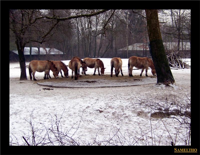 Le zoo de Munich Munich24
