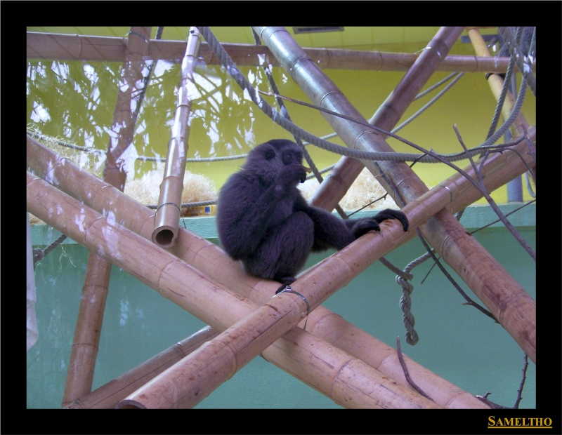 Le zoo de Munich Munich29