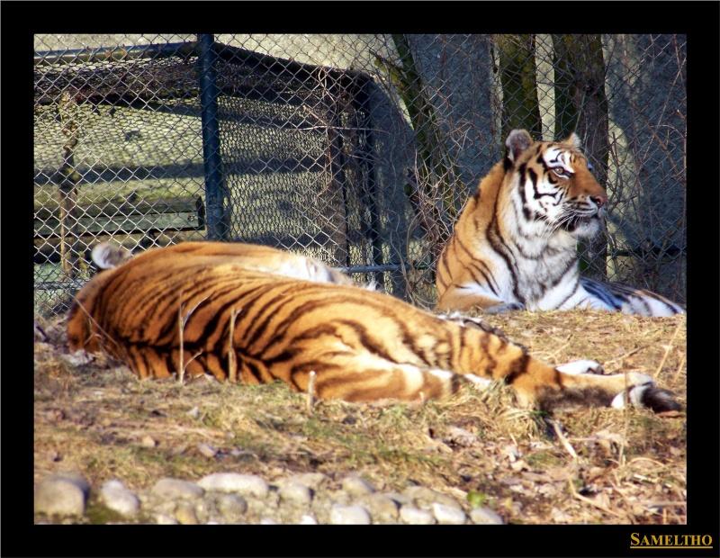 Le zoo de Munich Munich31