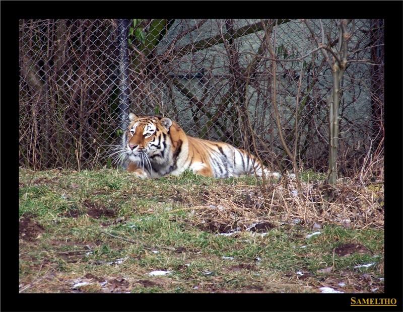 Le zoo de Munich Munich32