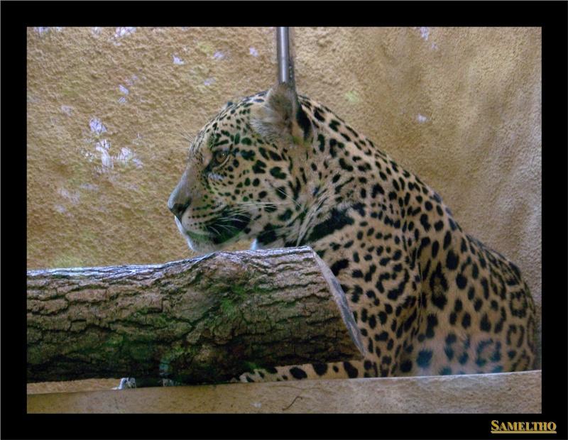 Le zoo de Munich Munich39