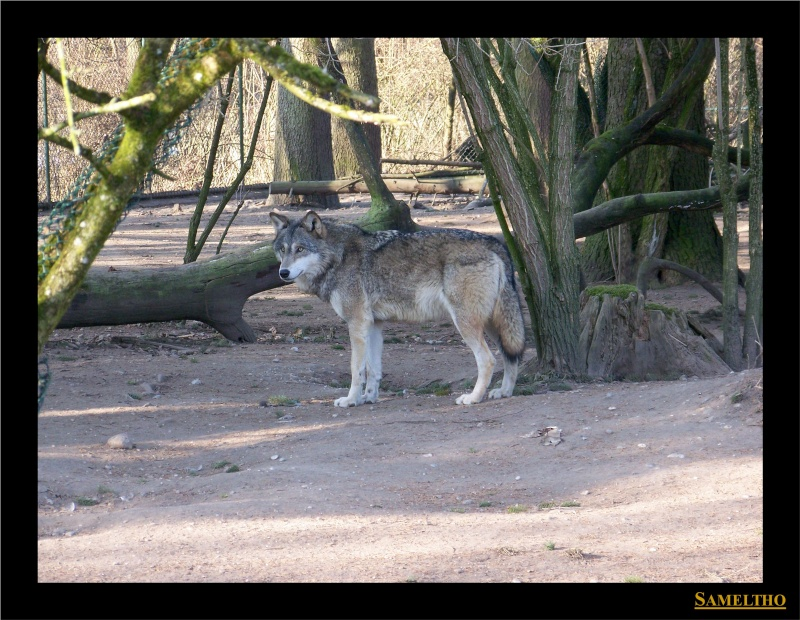 Le zoo de Munich Munich40