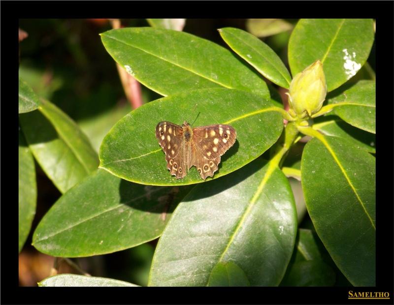 Les papillons sauvages du zoo d'Amiens Panda_15
