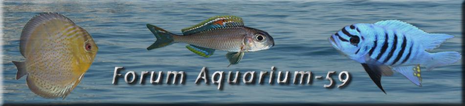 Aquarium-59