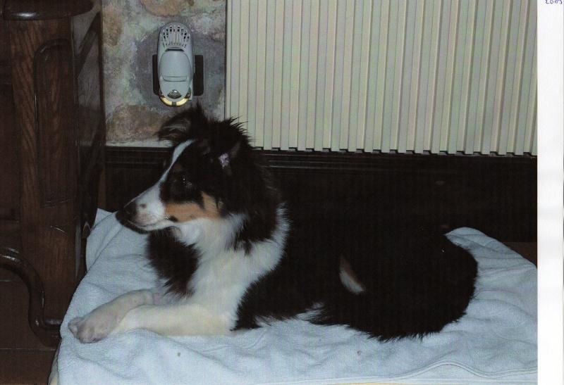 Un petit mâle tricolor disponible chez une amie (VENDU) Nouvel12