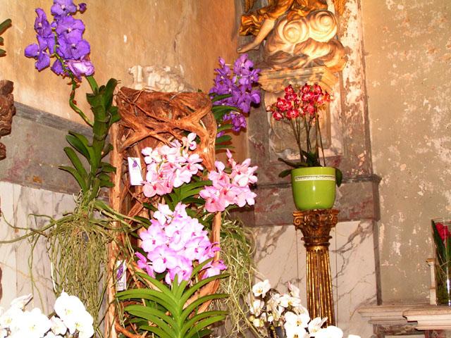 Tulipes, rhodos et orchidées ... Pict6714