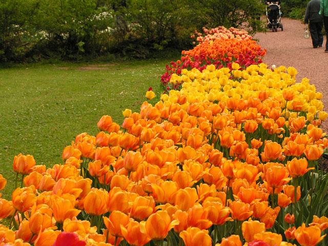 Tulipes, rhodos et orchidées ... Pict6715
