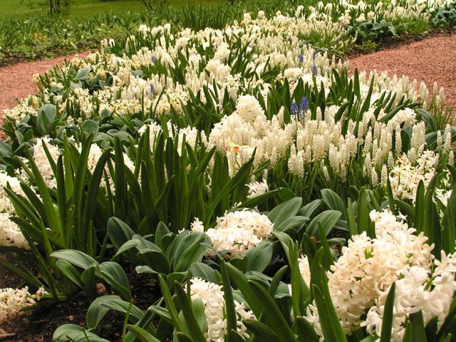 Tulipes, rhodos et orchidées ... Pict6716