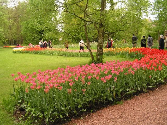 Tulipes, rhodos et orchidées ... Pict6717