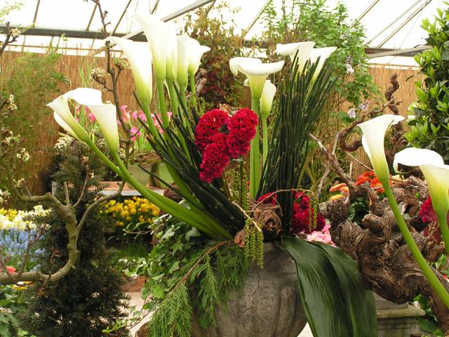 Tulipes, rhodos et orchidées ... Pict6718