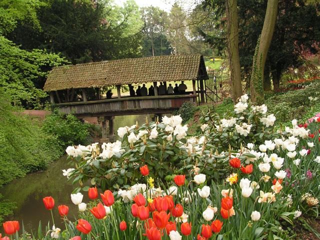 Tulipes, rhodos et orchidées ... Pict6721