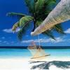NEWPORT BEACH ♥ - Portail 2359610