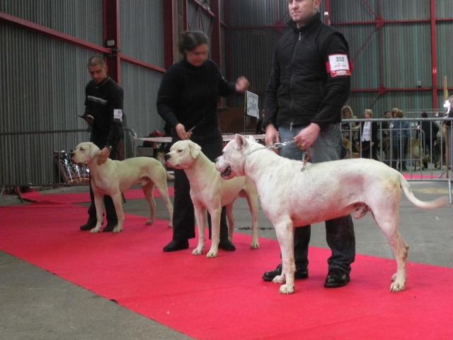 Expo Limoges 2009 Dscn0713