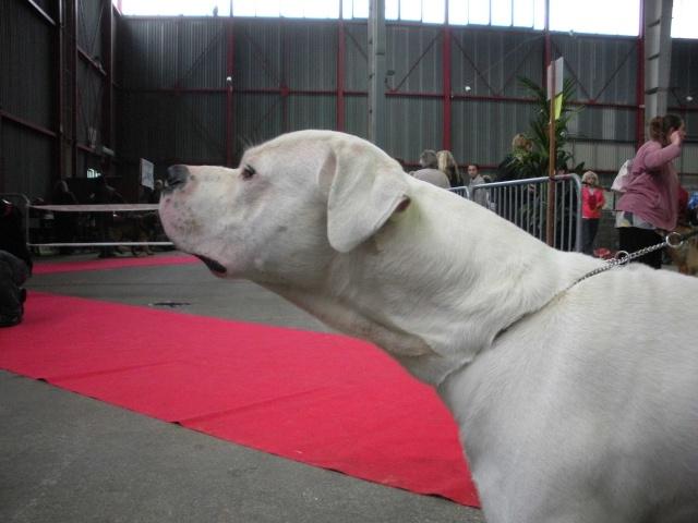 Expo Limoges 2009 Dscn0716