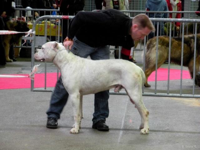 Expo Limoges 2009 Dscn0718
