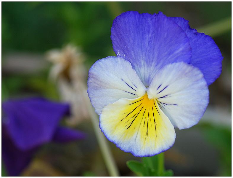 Fleurs diverses 11c11