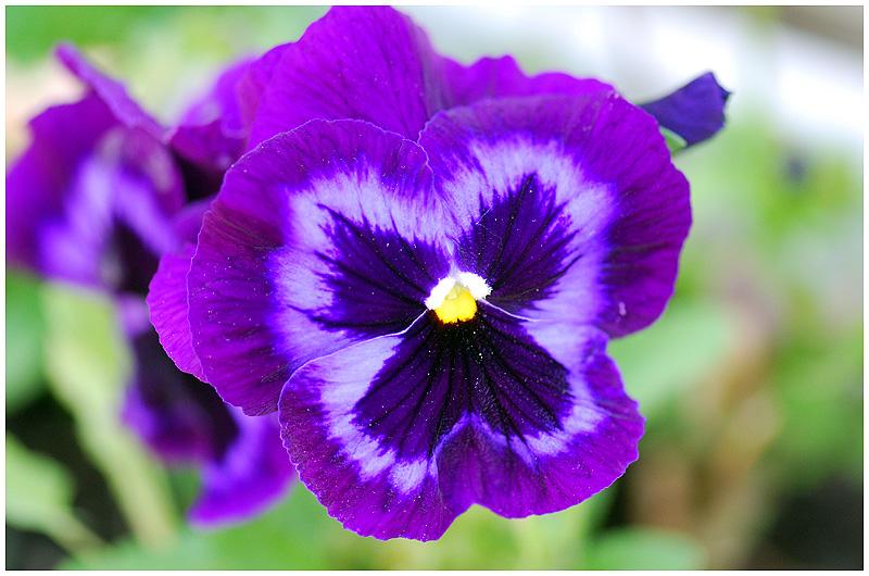 Fleurs diverses 12c11