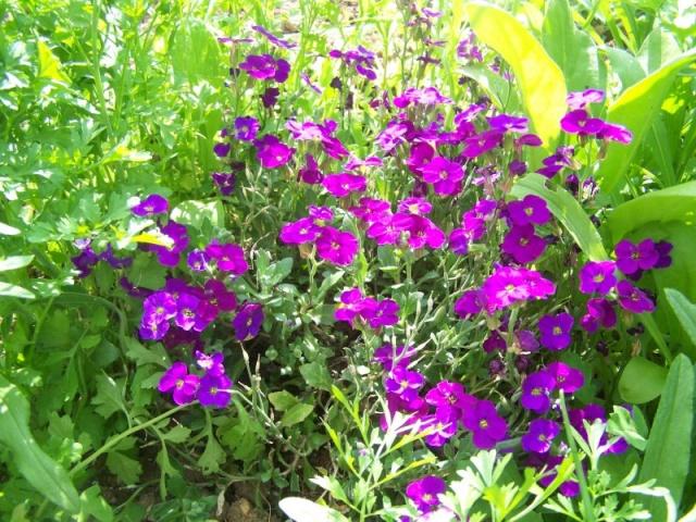 Fleurs du jardin Fleurs10