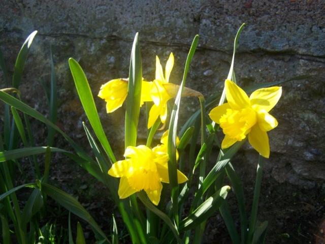 c'est le printemps chez Michelle Jonqui10