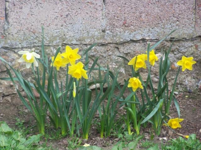 c'est le printemps chez Michelle Jonqui11
