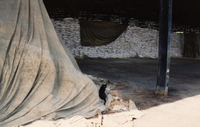 [Campagne] DJIBOUTI - TOME 1 - Page 22 Photo_17