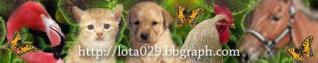 Forum Animalier Bannie11