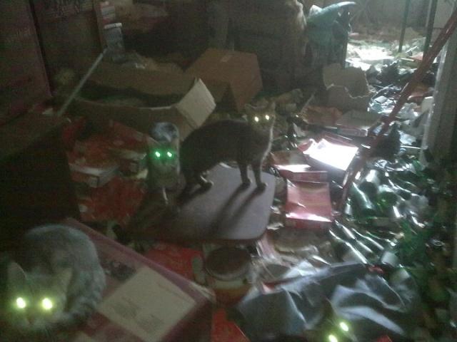 Une trentaine de chats à sauver Chat110