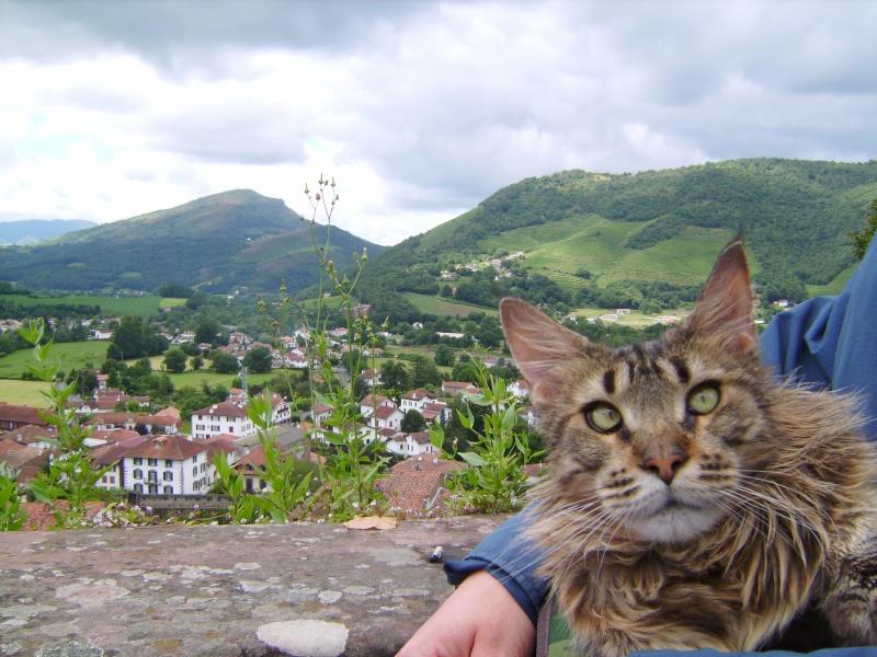 Transport d'un chat insuffisant rénal Imgp0210