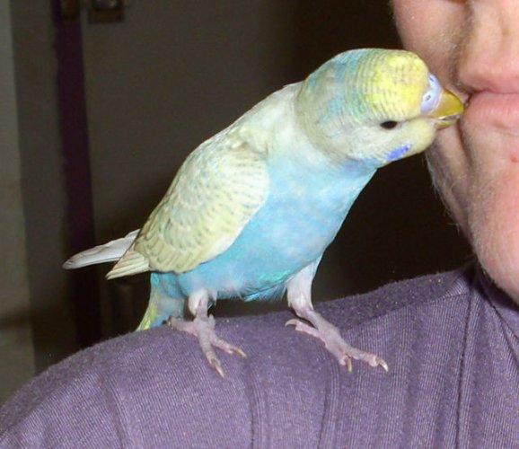 mes oiseaux de volière... 24836410